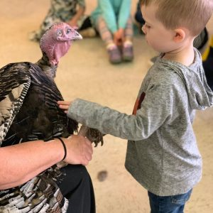 UCNS enrichment provides for fun programs like Farmer Sharon - bringing her turkeys for all to see!