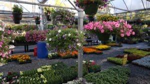 Nurseries Garden Centers Delivering