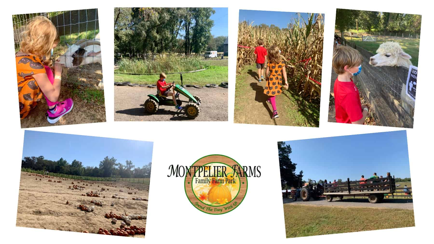 Montpelier Farms Pumpkin Patch