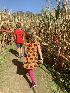 Montpelier Farms Corn Maze