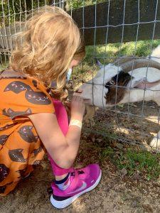 Montpelier Farms goat