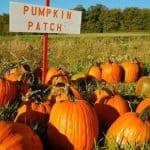 Maryland Pumpkin Patches