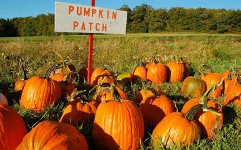 Maryland Pumpkin Patches Loved by Route 1 Families